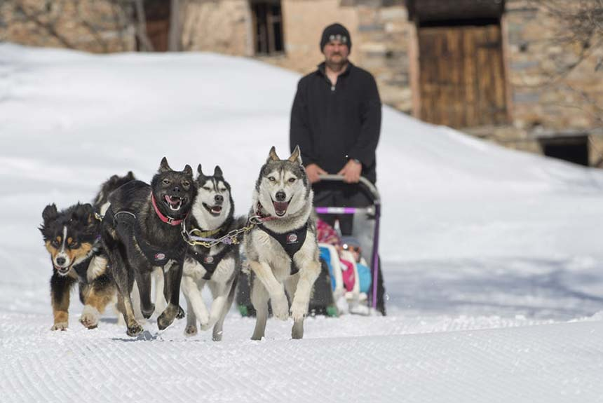If you're not Skiing at Easter then why not enjoy a sunny Dog Sled ride
